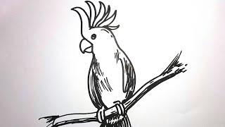 Cara Menggambar Burung KAKATUA
