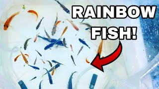 BUYING RAINBOW FISH for my GIRLFRIEND'S AQUARIUM!