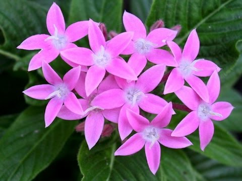 flowers types, Beautiful flower