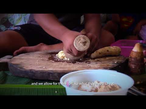 CULTURAL CURRENTS/ROOTS: Uprooting Taro