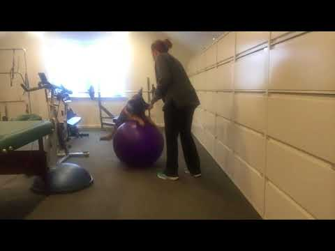 Circus Dog Ball Training with Jack the Shepinois 6 Months Old