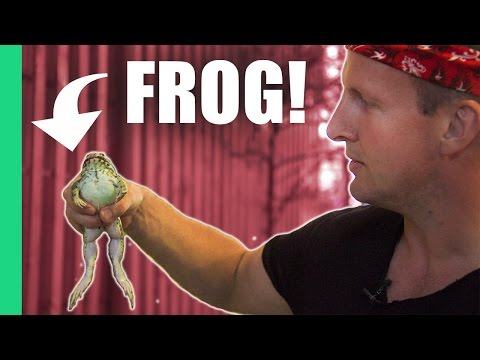 Eating frog in Vietnam!