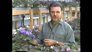 The New Garden With John Dromgoole: African Violets