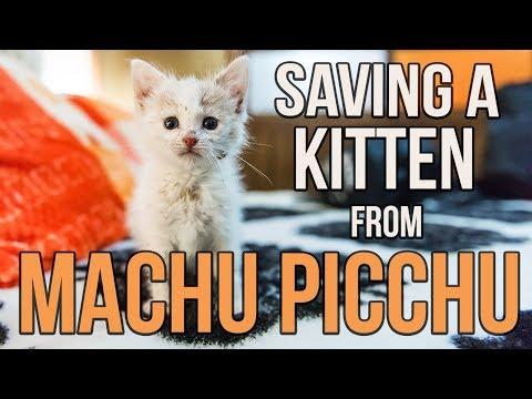 Saving Munay, the Machu Picchu kitten