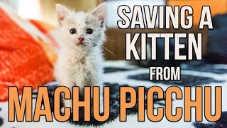 Saving Munay, the Machu Picchu kitten