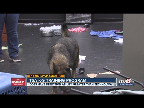TSA training for canines