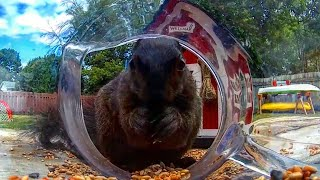 Daily Videos For Vets - Squirrel and Chipmunk Fun - July 6 2020