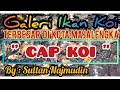 Galeri Ikan Koi Terbesar Di Kota Majalengka Ya  Cap Koi  By Sultan Najmudin  Mp3 - Mp4 Download