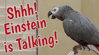 Shhhh! Einstein Wants To Talk!