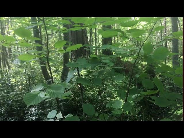 Filosofía en el bosque 30. Salud mental y emocional. Alucinaciones Parte 1.