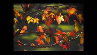 Karrin Allyson - Autumn leaves