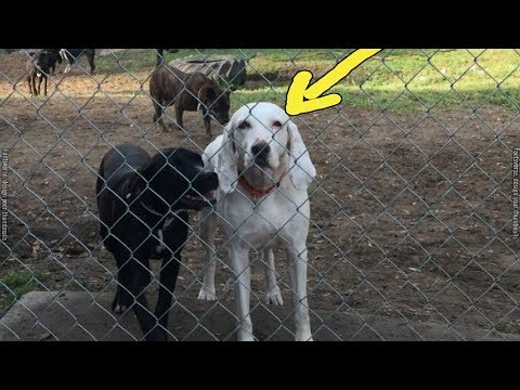 This Dog Was Adopted 8 Times But Always Ends Up Escaping Back To Shelter