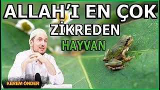 Allah'ı en çok zikreden hayvan: Kurbağa / Kerem Önder