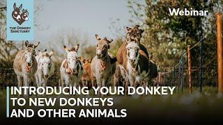 Introducing your donkey to new donkeys and other animals | The Donkey Sanctuary Webinars