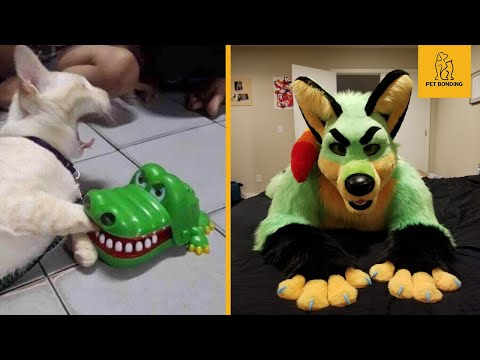 funny-dogs-🐶-and-cats-😺-reaction-to-toy---pets-bonding-2020