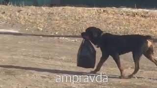 Собаки в свободном ходят в магазин вместо хозяев