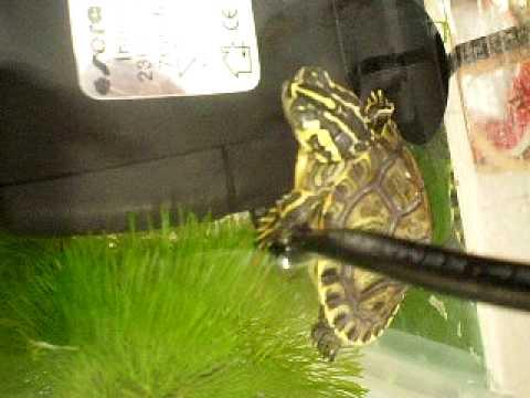 acquario tartarughe d 39 acqua dolce youtube