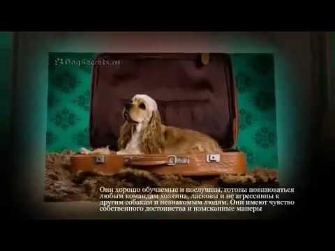 Породы собак EliteDogs