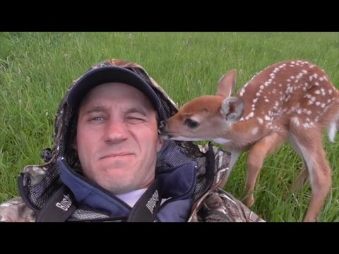 Baby Deer Doesn't Want to Leave Her Rescuer's Side