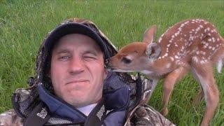 Baby Deer Doesn