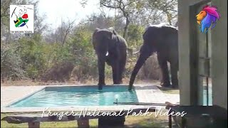 Pool Problems with Elephant and Lion in the African Bush.
