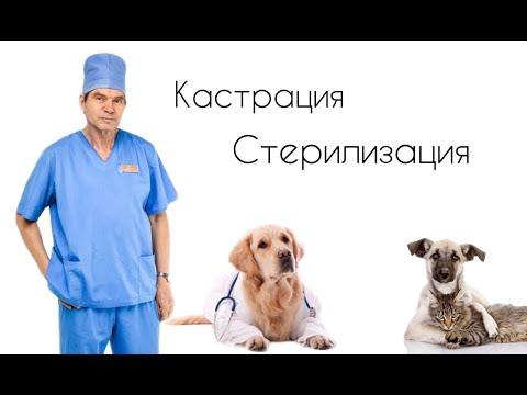 Кастрация и стерилизация//ЗА или ПРОТИВ//Разоблачение мифов