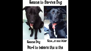Dakota's Story - Spca 2 Service Dog
