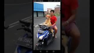 Chuyện lạ chó chở người