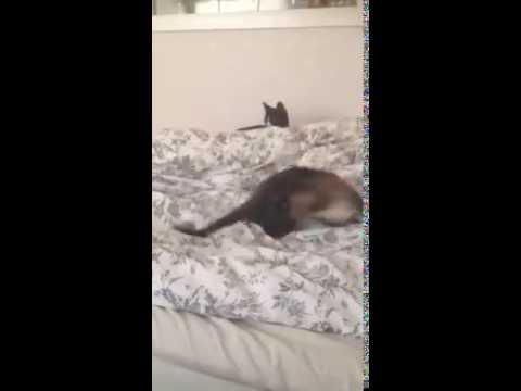 Lynda jagar sin svans