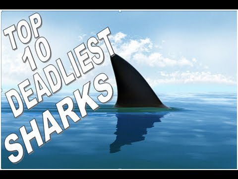 Deadliest Shark In The World | www.pixshark.com - Images ...