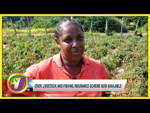 Insurance Scheme Now Available for Jamaican Farmers | TVJ Business News - July 22 2021