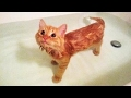 Cats in Bathtub (NEW) () [Funny Pets]