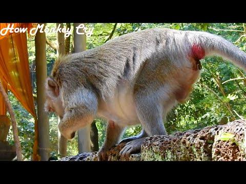 Jane Updated News! Something stuck Inside Jane, Behind,Monkey Jane Feel Anxious& Also Hungry Food