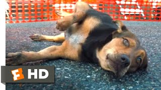 A Dog's Way Home (2018) - Hit by a Car Scene (8/10) | Movieclips