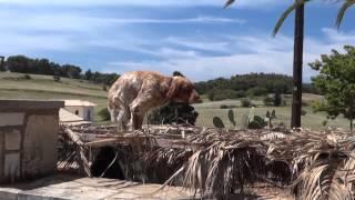 Лучший отдых в греции. Zakynthos, Greece [Holiday Review](, 2013-10-14T20:30:39.000Z)