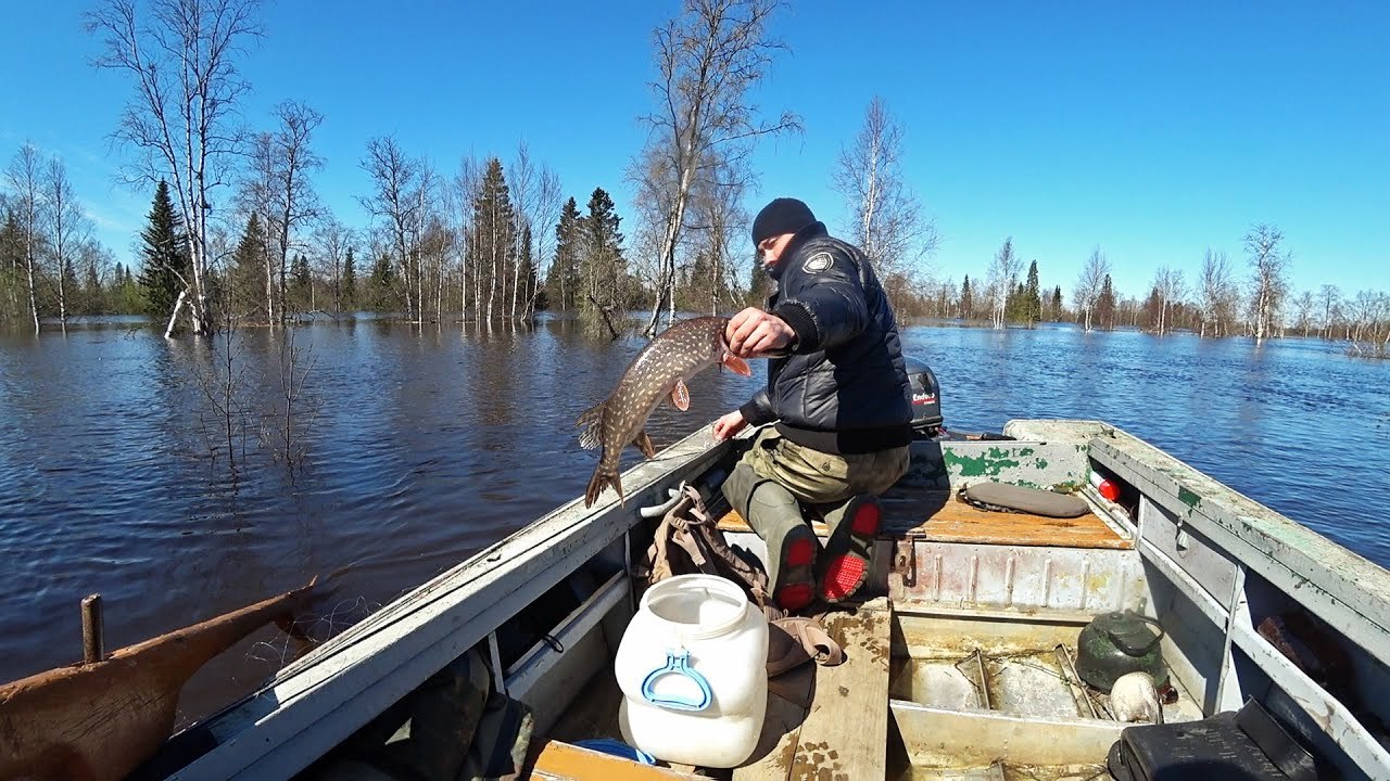Украли рыболовные сети. Проверка сетей в лесу.