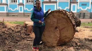 Строение стебля. Раздел : многообразие растительного мира. Передвижение веществ у растений