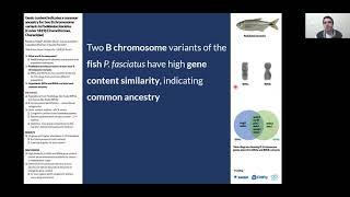 SBE meeting 2021's poster presentations: Vidal et al.: Psalidodon, B chromosome, Astyanax