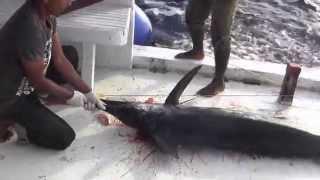 Рыбалка на марлина мальдивы marlin fishing(Рыбалка на марлина мальдивы marlin fishing., 2014-03-05T06:36:38.000Z)