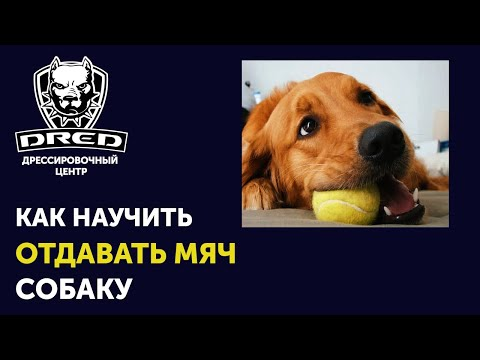 Как научить собаку приносить и отдавать мяч   Почему собака на отдает мяч