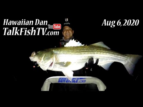 Cow Striped Bass Are Here - Central Long Island Weekly Fishing Report - Aug 6, 2020 - TalkFishTV.com