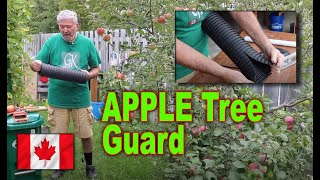 How to care for a small apple tree