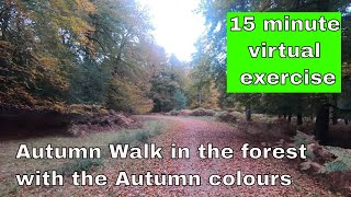 Virtual Autumn Hike for home exercising - 15 minutes through the forest and the Fall colors