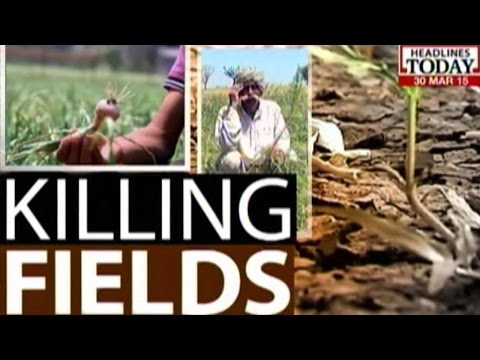 Killing Fields: 1.2 Lakh Hectares Of Mustard Crop Damaged Due To Bad Weather