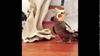 bird fucking kills itself