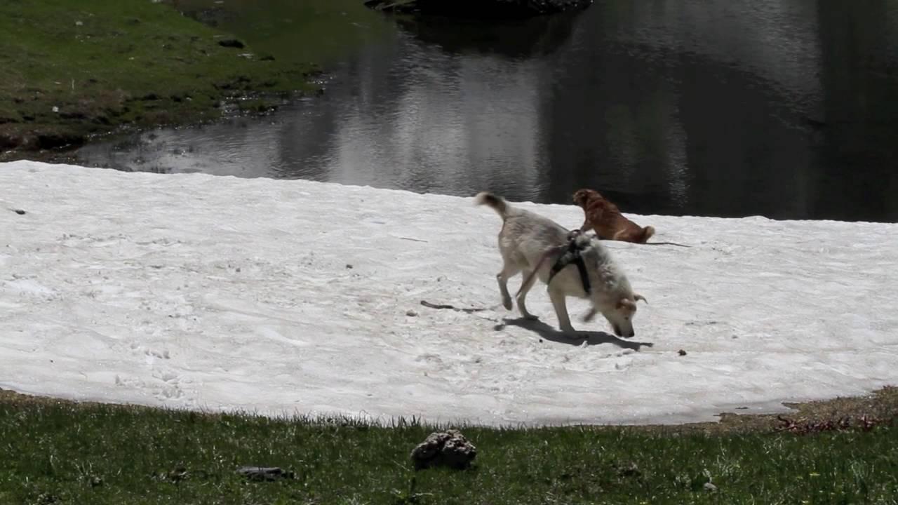 Fulmine e kali? sulla neve in valgrisenche