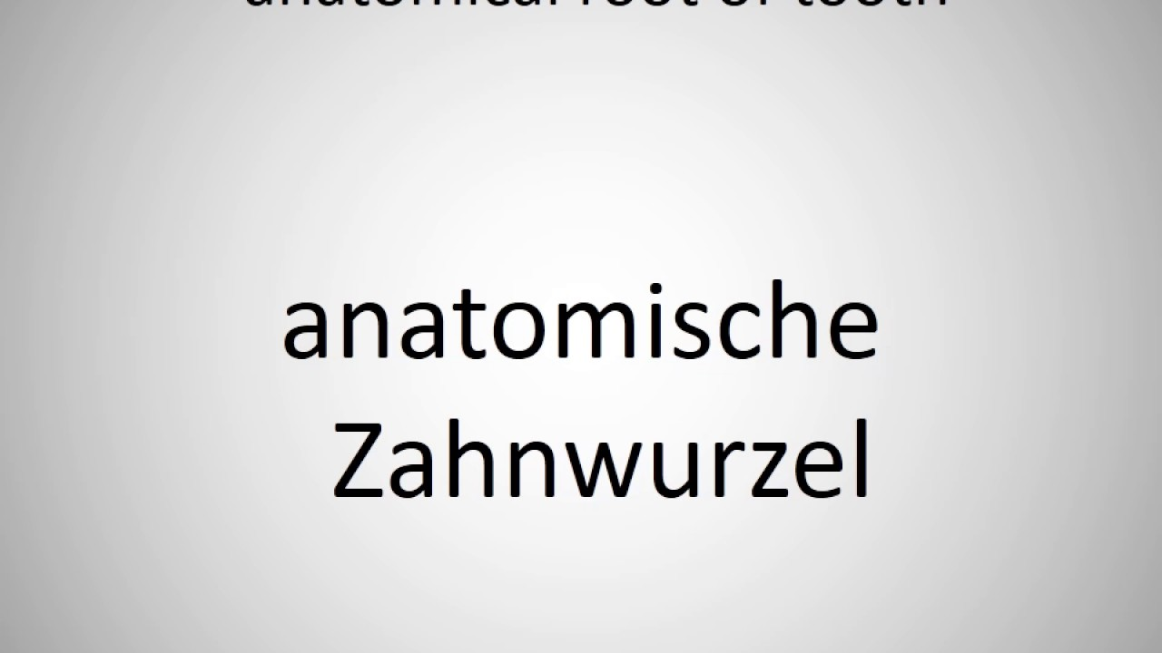 How to say anatomical root of tooth in German? - YouTube