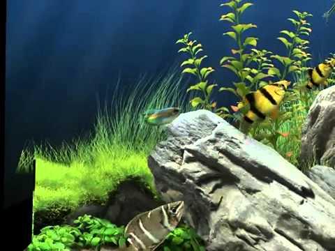 Screensaver 3D ภาพพักหน้าจอตู้ปลาว่ายไปมา สวยมากค่ะ avi