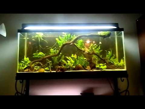 Fish tank question how often do you do a water change for Fish tank riddle
