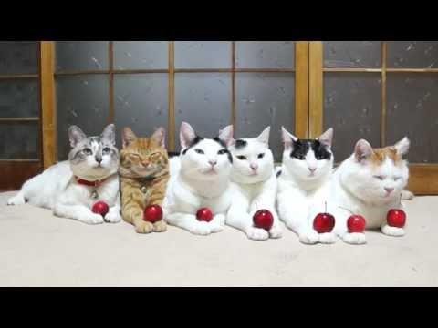 のせ猫 x ミニりんごと6匹の猫 Mini apple and cats